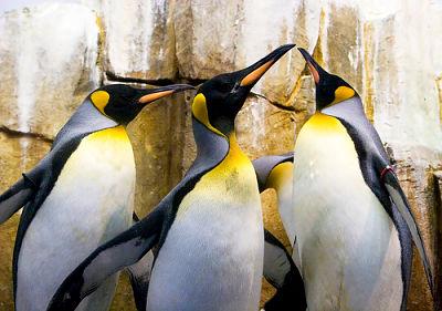 Dansul pinguinilor (pamflet)