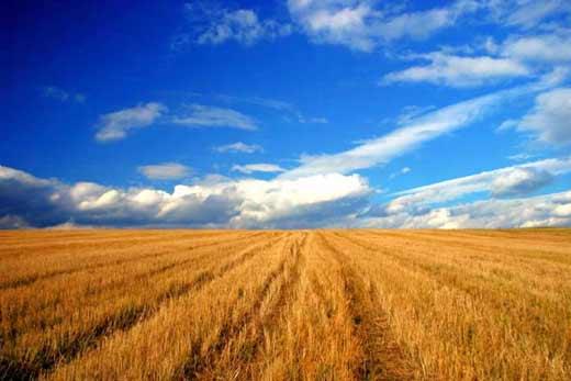 Japonia va oferi Rep. Moldova 4,8 milioane de dolari pentru sectorul agricol