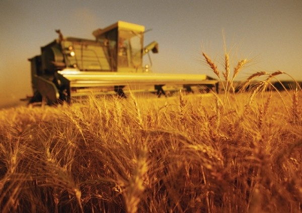 Producătorii agricoli din Rep. Moldova vor fi introduşi în Catalogul Produselor Alimentare Certificate din România