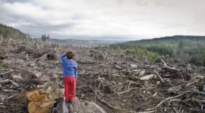 Peisajul forestier din Rep. Moldova, devorat de corupţie. Ministrul Mediului: S-au furat anual 10 mil. de euro din acest sector