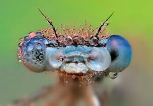 Sursă foto: ecology.md