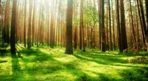 Pădurea Centenar, demers al silvicultorilor din România şi Republica Moldova