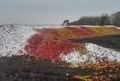 O poză cât o mie de cuvinte! Cum zac merele Rep. Moldova, de Ziua Agricultorului